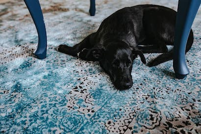 dog pet animal pillows - How To Eliminate Echo In Room Or Office Space